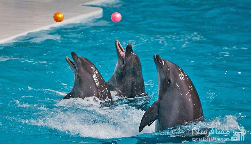 پارک دلفین ها جزیره کیش, گروه گردشگری مسافر سلام