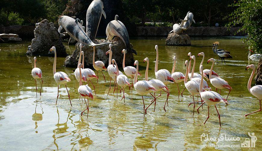 باغ پرندگان جزیره کیش