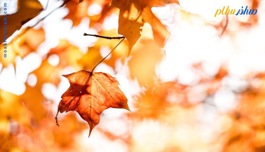 زیباترین مناطق پاییزی