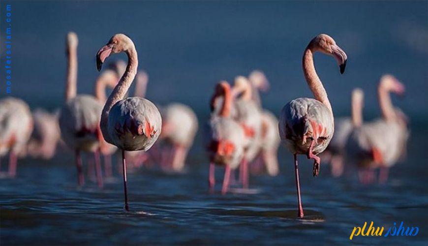 بهشت پرندگان