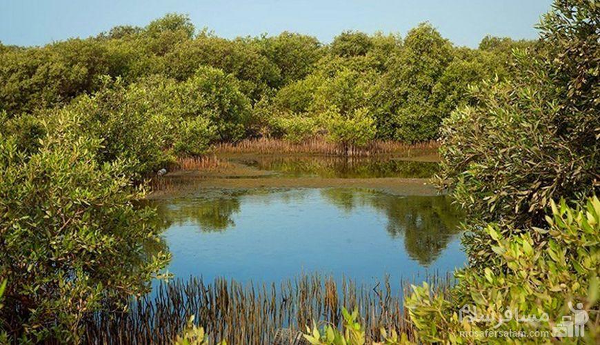 جنگل های حرا جزیره قشم