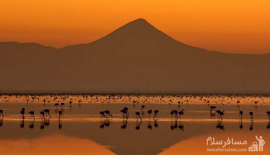 میانکاله بهشت پرندگان مهاجر