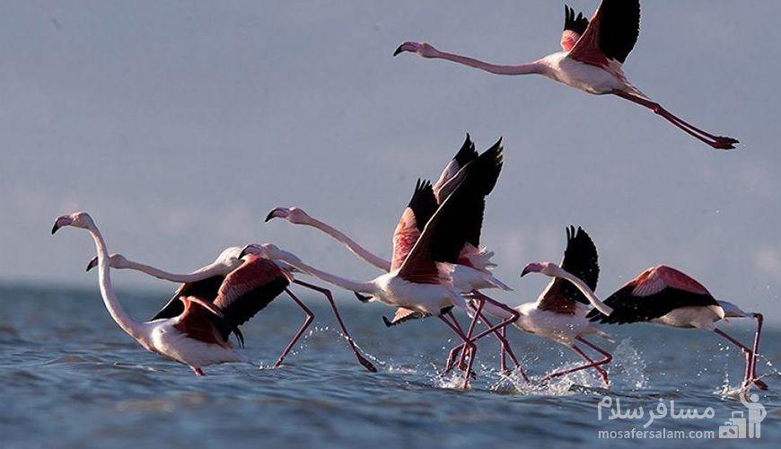 تالاب میانکاله بهشت پرندگان مهاجر