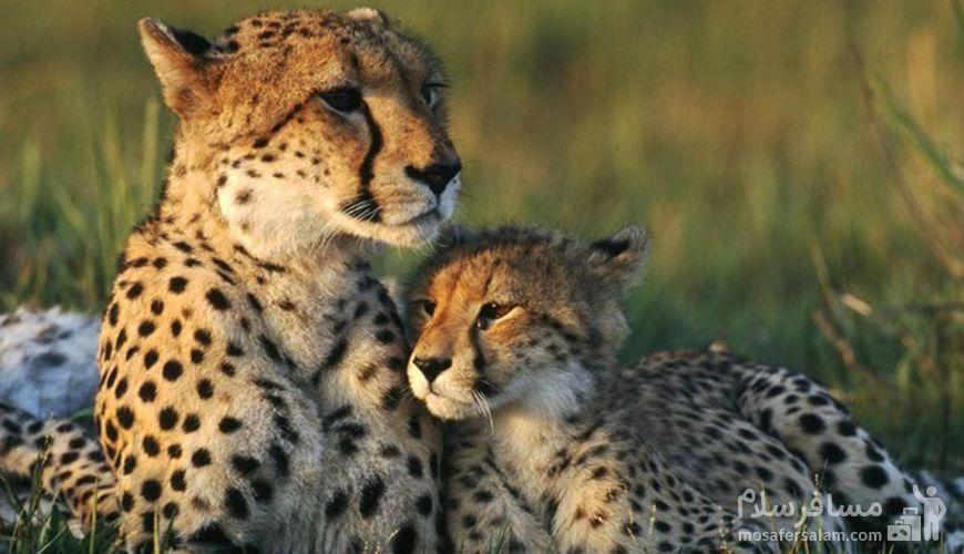 پستانداران گردنه خوش ییلاق