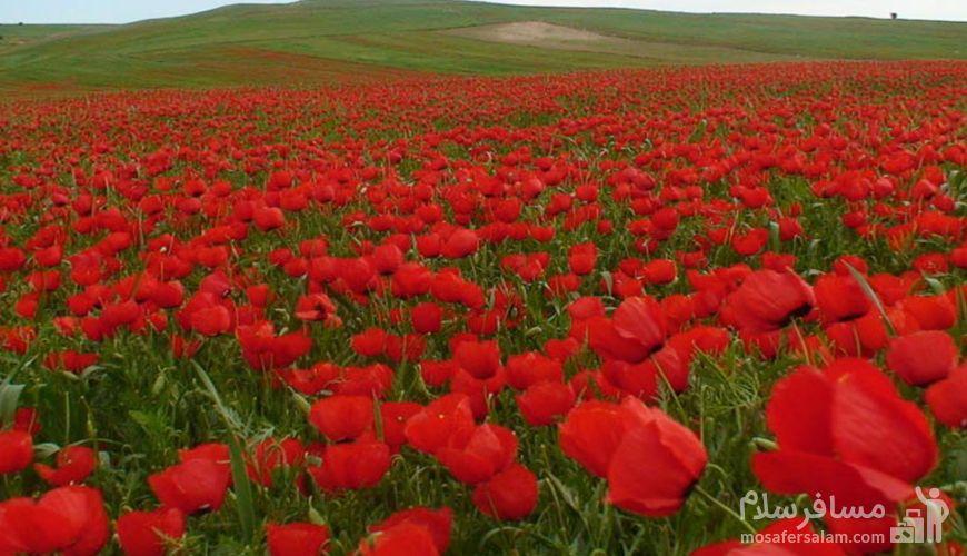 دره سرخ خوش ییلاق