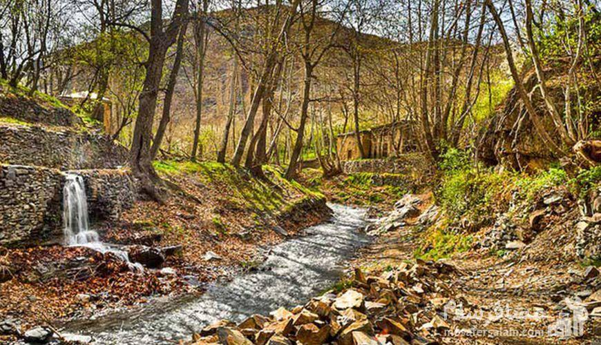 جنگل جیغ, جاذبه گردشگری