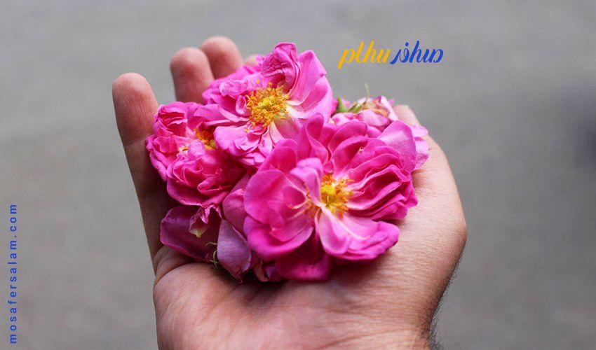 گلاب گیری در کاشان