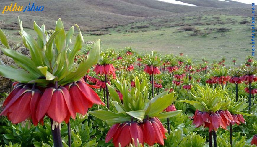 مشهورترین دشت های پر گل ایران