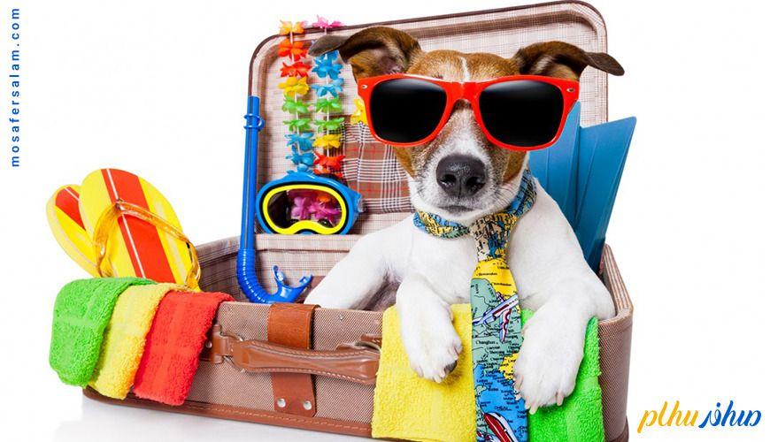 سفر با حیوان خانگی